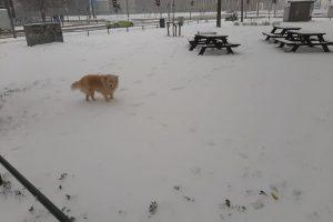hond in veld-Suzanne Vonk